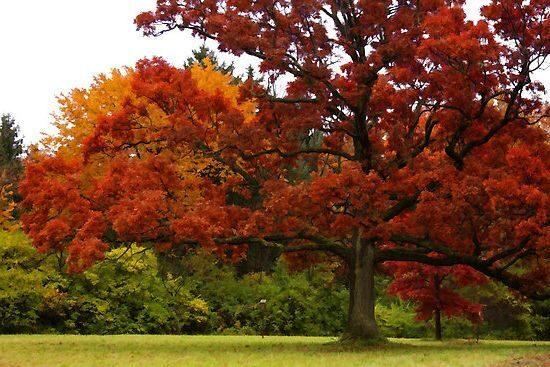 дуб осенью описание